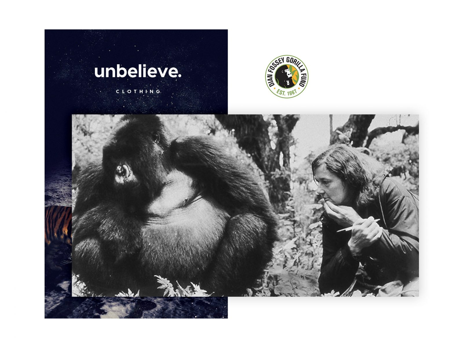 gorilla-bt